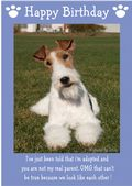 "Wire Haired Fox Terrier-Happy Birthday - ""I'm Adopted"" Theme"